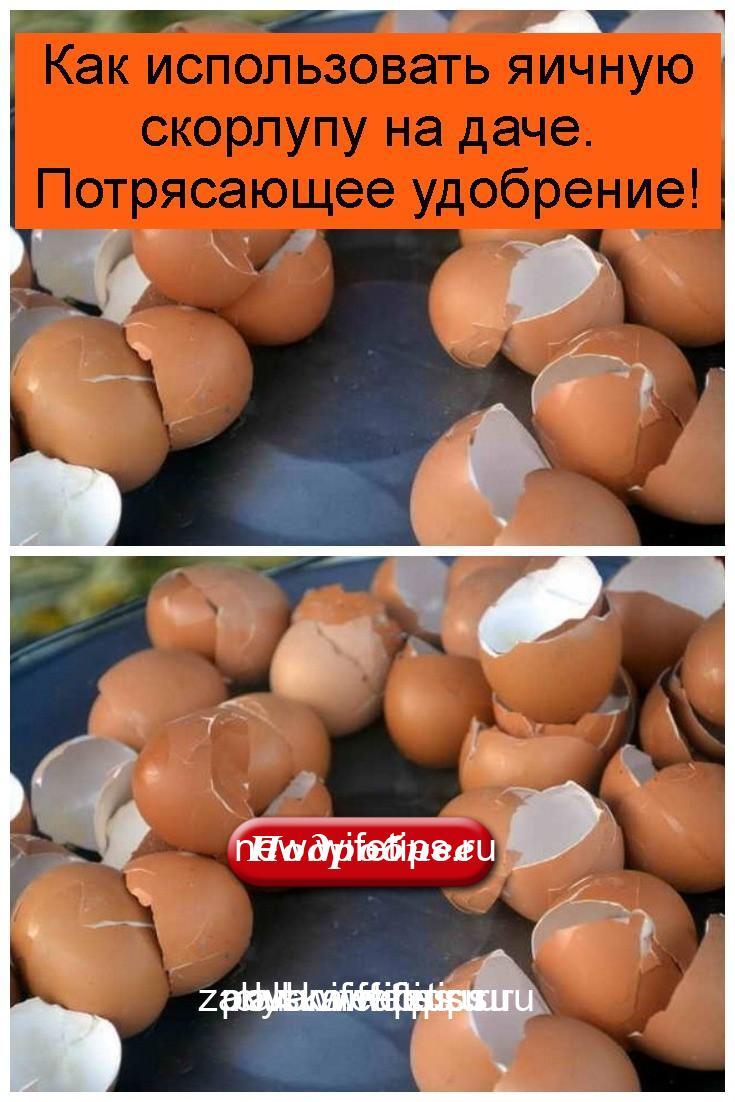 Как использовать яичную скорлупу на даче. Потрясающее удобрение 4