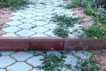 Как избавиться от травы на садовых дорожках. Простой и эффективный способ 1