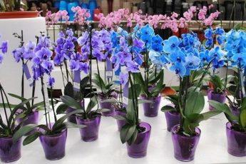 Как одну орхидею превратить в 100. Секреты рассадки цветка 1